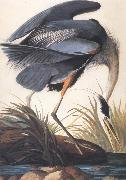 Great Blue Heron John James Audubon